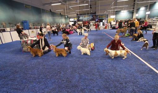 Koirien monitoimikeskus ShowHau Center hakee kasvua joukkorahoituksella