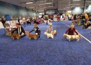 Koirabisneksen joukkorahoitus kiinnostaa – ShowHau Center kerännyt jo 400 000 euroa yleisöltä