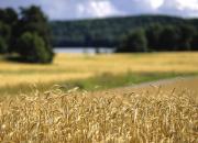 Retki ruispellolle – Missä leipä kasvaa?