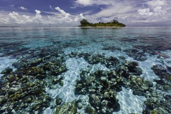 south-water-caye-marine-reserve-on-yksi-belizen-rantariuttojen-suojelualueen-seitsemasta-suojellusta-alueesta.-c-antonio-busiello-wwf-us.jpg