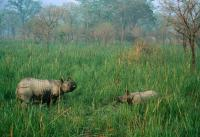 c-jeff-foott-wwf-kaksi-intiansarvikuonoa-nepal-royal-chitwan-national-park-terai-arc-landscape.jpg
