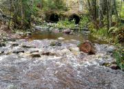 Vaalimaanjoen kututalkoissa avataan uusia kulkureittejä uhanalaisille taimenille