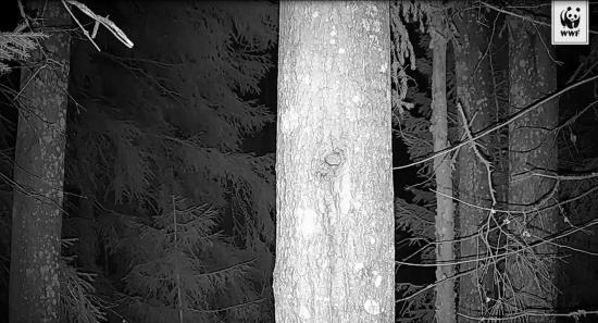 maisema-liito-oravakamerassa-copyright-wwf.jpg