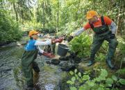 WWF ja K-ryhmä avaavat uhanalaiselle vaellustaimenelle kutureittejä Kuhmossa – kahden turhan esteen takana taimenta odottaa 10 kilometriä uutta elinympäristöä