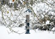 Lintujen talviruokinta ja linnunpönttö pihapuussa tarjoavat näköalan sirkuttajien maailmaan