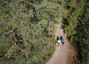 Haltia tarjoaa avun sienikaipuuseen