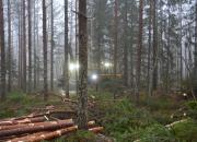 Suomalainen metsätalous vastaa ilmastohaasteeseen – tulevaisuus on puusta tehtävissä uusiutuvissa tuotteissa