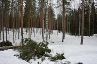 vapaan-kelkkailun-aluetta-keuruun-tonttumaessa-vapaasti-kaytettava-kuva-metsahallitus.jpg