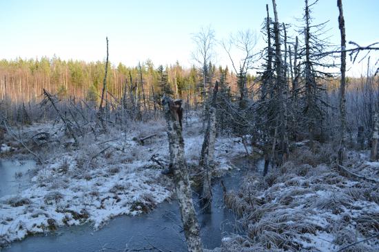 tulvakosteikko_kuva-metsahallitus-vapaasti-kaytettava-kuva.jpg