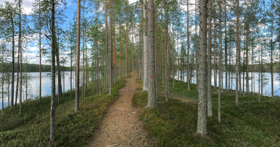 hossa_hoiluansarkka_kokalmuksen_kierros_hossa_tuuliturunen_200dpi.jpg