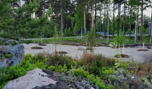 Park named after Teemu Pukki to be inaugurated in Pyhtää – Norwich City FC and Kotkamills will plant 26 trees in honour of World Environment Day (5.6.) and Pukki's goals scored