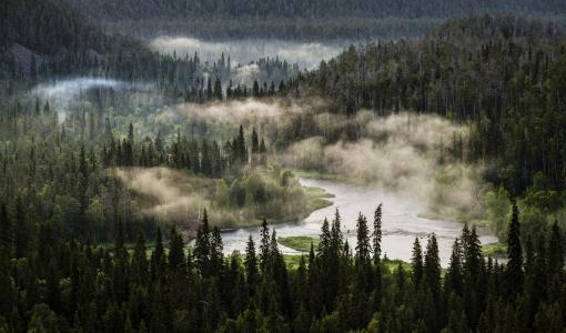 Villifestivaali valtaa Oulangan kansallispuiston tulevana viikonloppuna