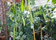 Nautitaan kasviksista kaikilla aisteilla