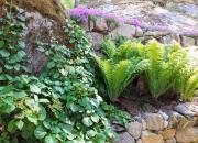 Pihan monivuotiset kasvit hidastavat ilmastonmuutosta