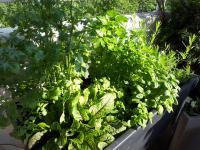 hyotyviljelyinnostuksen-myota-luonnonmukaisuus-kiinnostaa-puutarhoissa.jpg