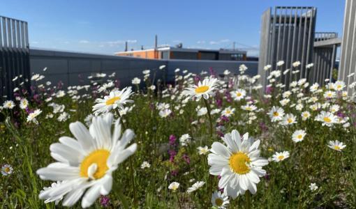 Lisätään kasvillisuutta kaupunkeihin