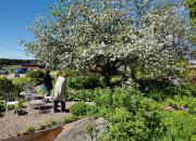 Omkring 550 trädgårdar deltar i årets version av Öppna trädgårdar