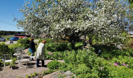 Ensi sunnuntaina puutarhat avautuvat!