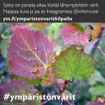 ymparistonvarit_insta02_haapa_ruska_marja-leena_nenonen_1080x1080px.jpg