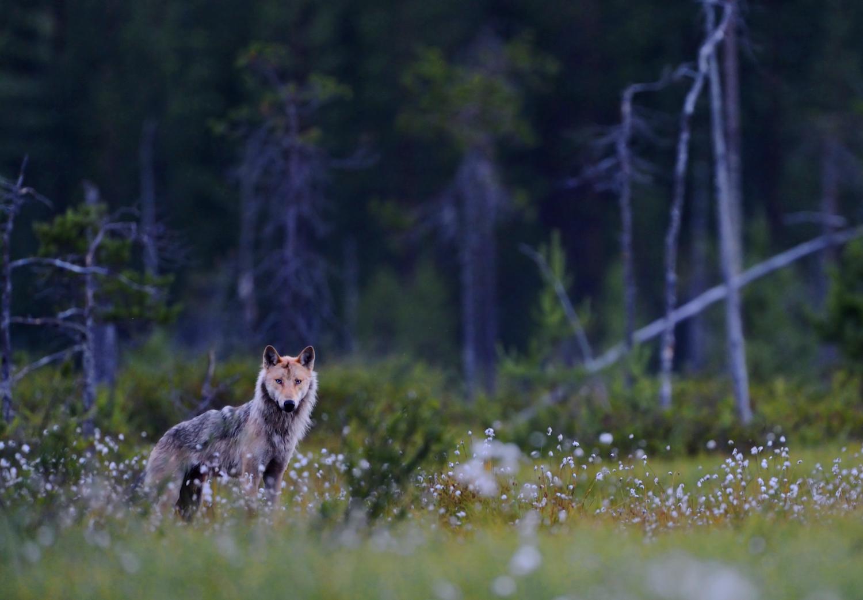 Suomen Luontoliitto