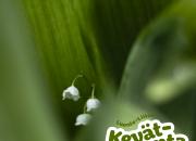 Luonto-Liiton Kevätseuranta: Kesä koitti Lappiinkin