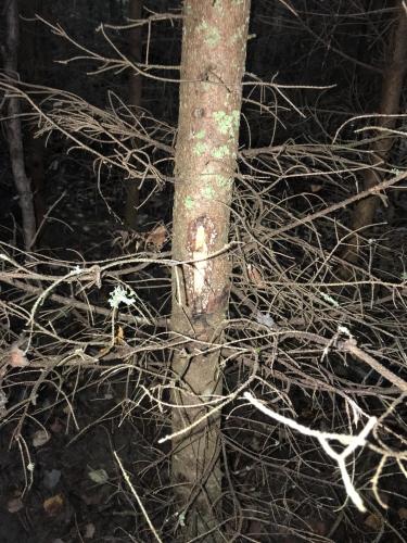 tulli_kuva8_katkopaikan_tunnistusmerkki_puussa.jpg