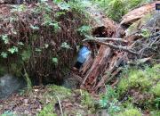 Tullen beslagtog 18 kilo amfetamin som gömts i terrängen