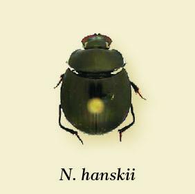 nanos_hanskii.jpg