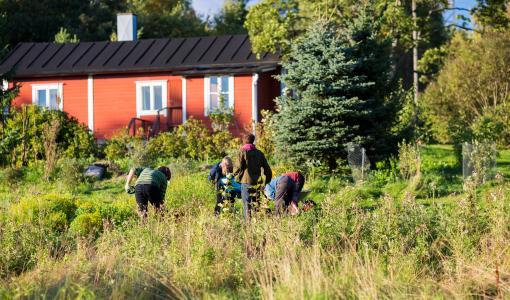 Syötävässä Puistossa yhdistyy ympäristökasvatus, sirkus, tango ja kaupunkiviljely
