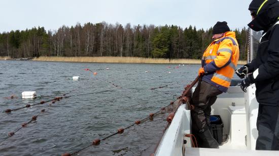 sarkikalan-kalastusta-lahikalahanke.-kuva-miina-maki-john-nurmisen-saatio.jpg