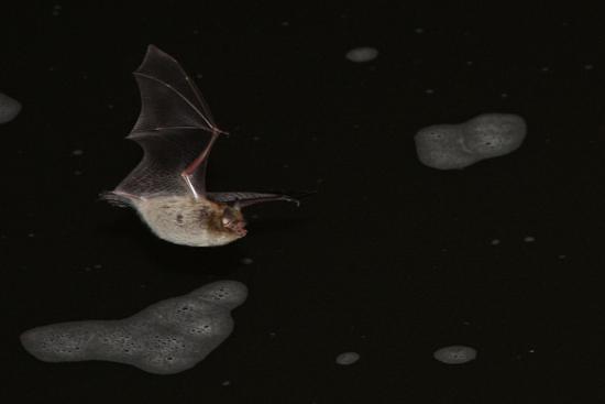 vesisiippa-timometsanen.jpg