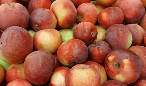 Kotimainen Lobo-omena on saapunut kauppoihin