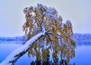 Suomen parhaat puuasiantuntijat Haltian luontolauantaissa 4.11.