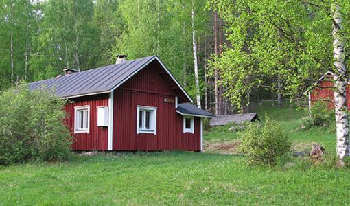 Harvinainen petovahinko Seppälän tilalla Kolilla