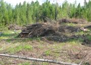 Metsähakkeen tuki ohjautuu pääösin kunnille